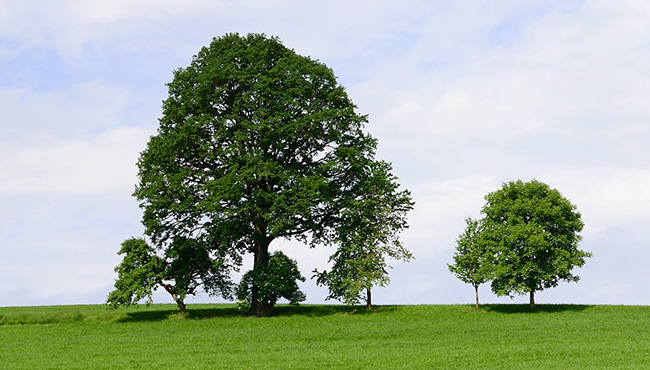 large tree with smaller trees